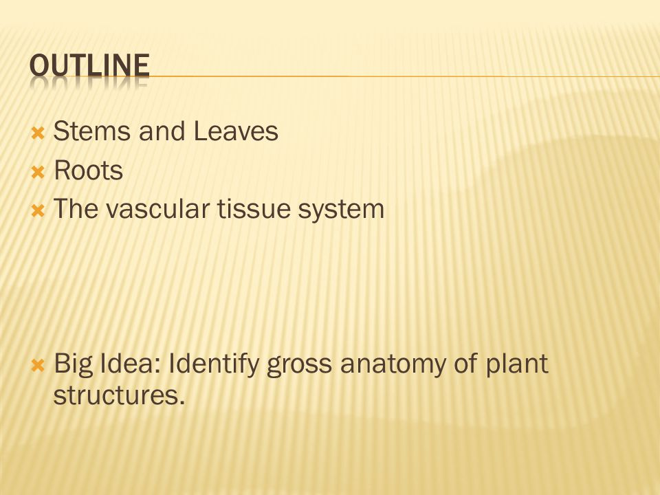  Stems and Leaves  Roots  The vascular tissue system  Big Idea: Identify gross anatomy of plant structures.