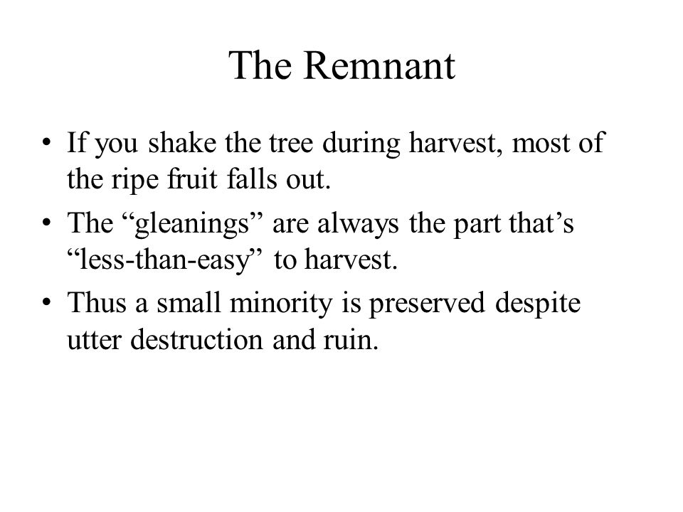 The Remnant If you shake the tree during harvest, most of the ripe fruit falls out.