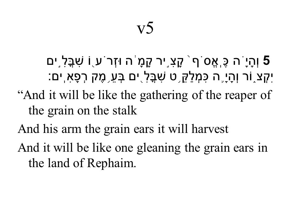 v5 5 וְהָיָ ֗ ה כֶּֽאֱסֹף ֙ קָצִ ֣ יר קָמָ ֔ ה וּזְרֹע ֖ וֹ שִׁבֳּלִ ֣ ים יִקְצ ֑ וֹר וְהָיָ ֛ ה כִּמְלַקֵּ ֥ ט שִׁבֳּלִ ֖ ים בְּעֵ ֥ מֶק רְפָאִֽים׃ And it will be like the gathering of the reaper of the grain on the stalk And his arm the grain ears it will harvest And it will be like one gleaning the grain ears in the land of Rephaim.