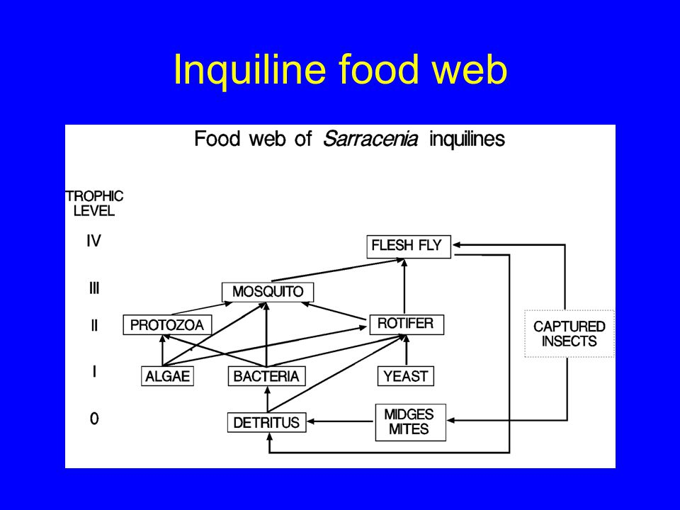 Inquiline food web