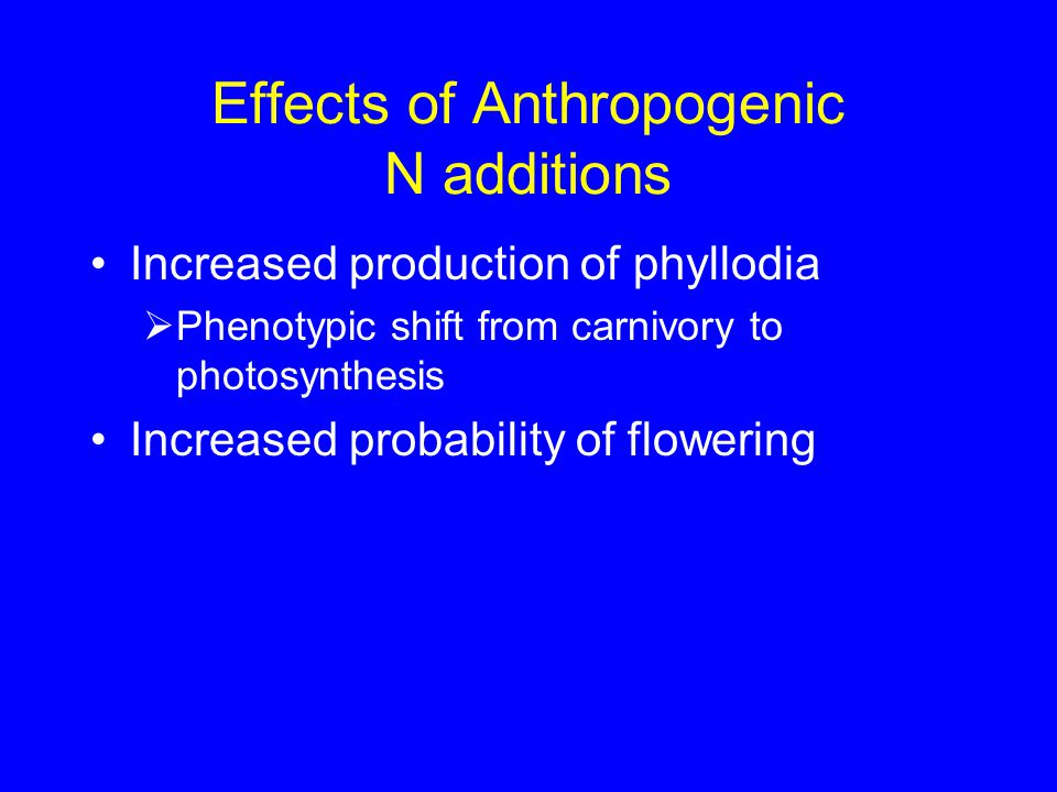 Effects of Anthropogenic N additions Increased production of phyllodia  Phenotypic shift from carnivory to photosynthesis Increased probability of flowering