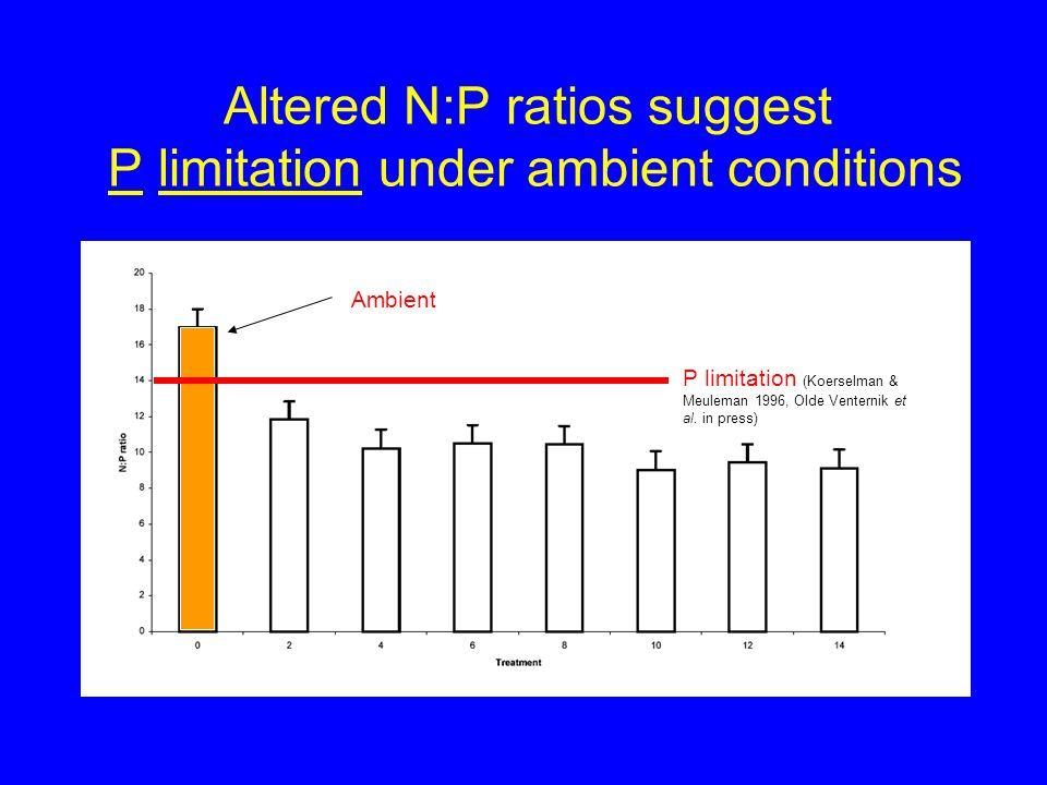 Altered N:P ratios suggest P limitation under ambient conditions P limitation (Koerselman & Meuleman 1996, Olde Venternik et al.