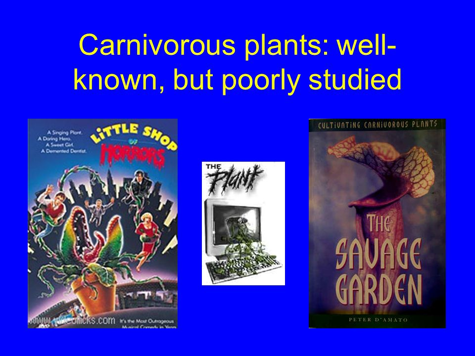 Carnivory in plants Phylogenetically diverse Morphological, chemical adaptations for attracting, capturing, digesting arthropods Common in low N habitats Poor competitors for light, nutrients