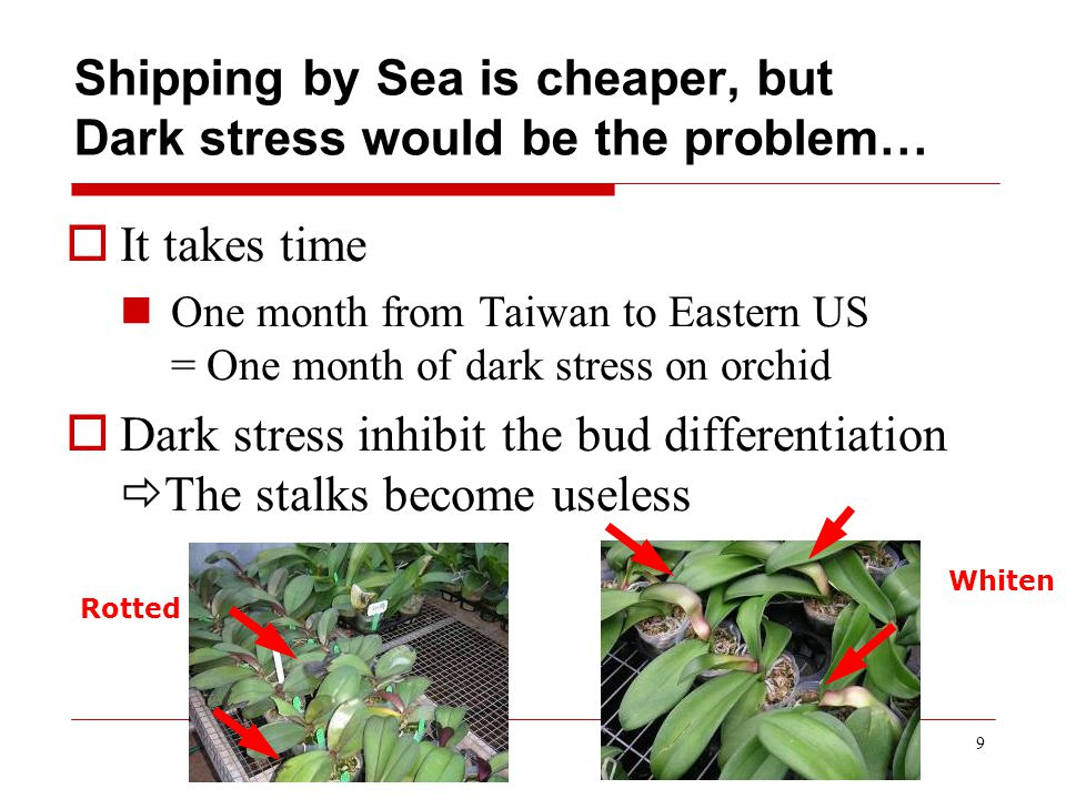 9 Shipping by Sea is cheaper, but Dark stress would be the problem…  It takes time One month from Taiwan to Eastern US = One month of dark stress on orchid  Dark stress inhibit the bud differentiation  The stalks become useless Rotted Whiten