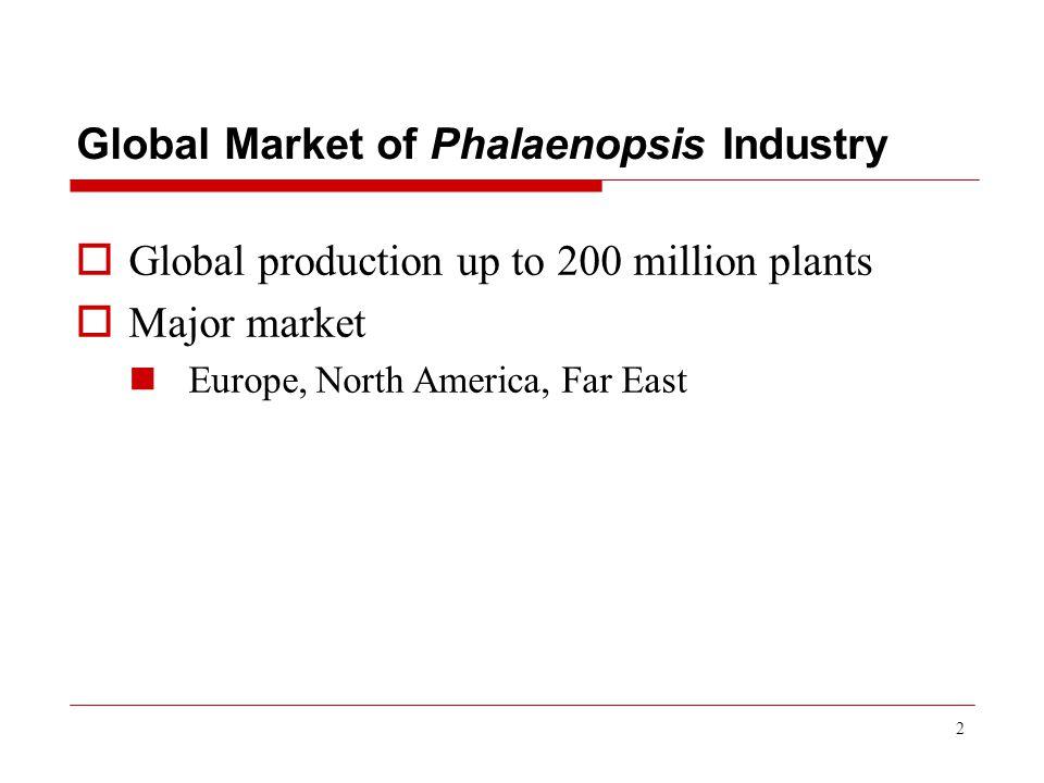 2 Global Market of Phalaenopsis Industry  Global production up to 200 million plants  Major market Europe, North America, Far East