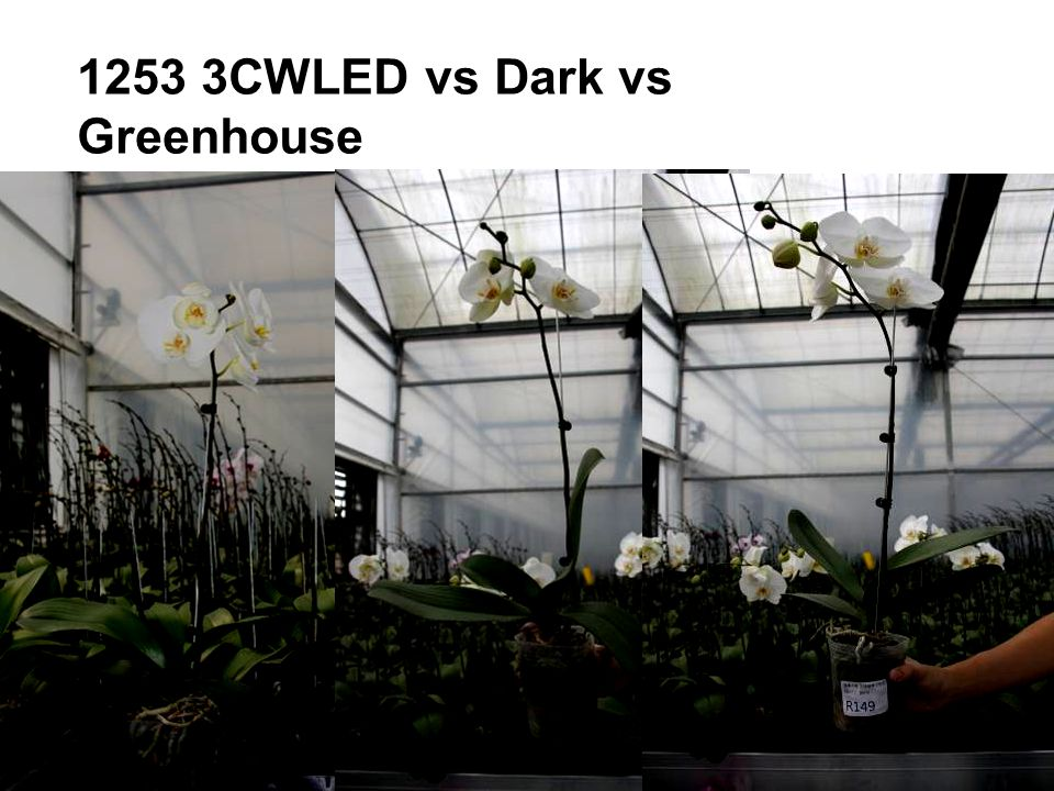 1253 3CWLED vs Dark vs Greenhouse