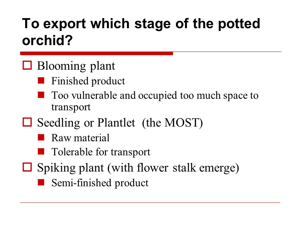 To export which stage of the potted orchid.