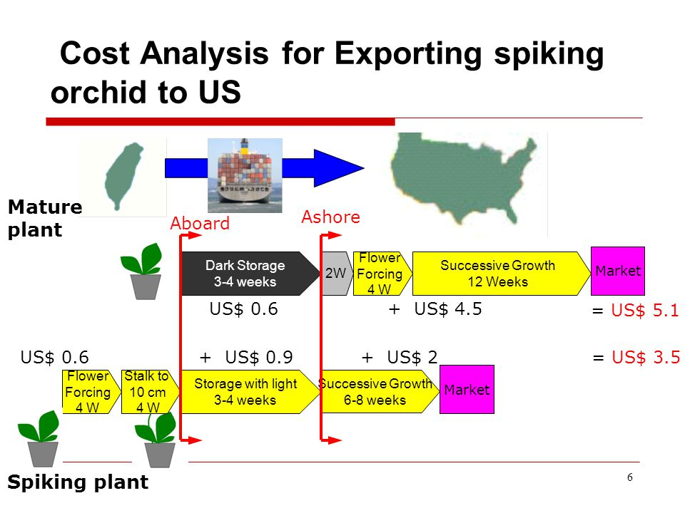 6 Cost Analysis for Exporting spiking orchid to US Flower Forcing 4 W Storage with light 3-4 weeks Successive Growth 6-8 weeks Stalk to 10 cm 4 W Dark Storage 3-4 weeks 2W Successive Growth 12 Weeks Market Flower Forcing 4 W Market + US$ 0.9 US$ 0.6+ US$ 4.5 + US$ 2 US$ 0.6 = US$ 5.1 = US$ 3.5 Mature plant Spiking plant Aboard Ashore