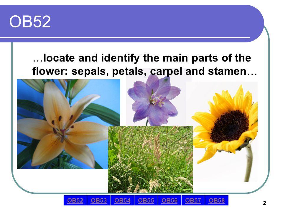 3 OB52 answer sepal …locate the sepal… OB52OB53OB54OB55OB56OB57OB58