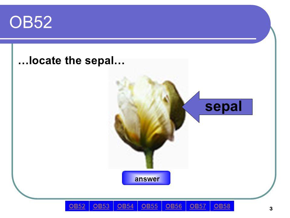 4 OB52 …locate the sepal… answer sepal OB52OB53OB54OB55OB56OB57OB58