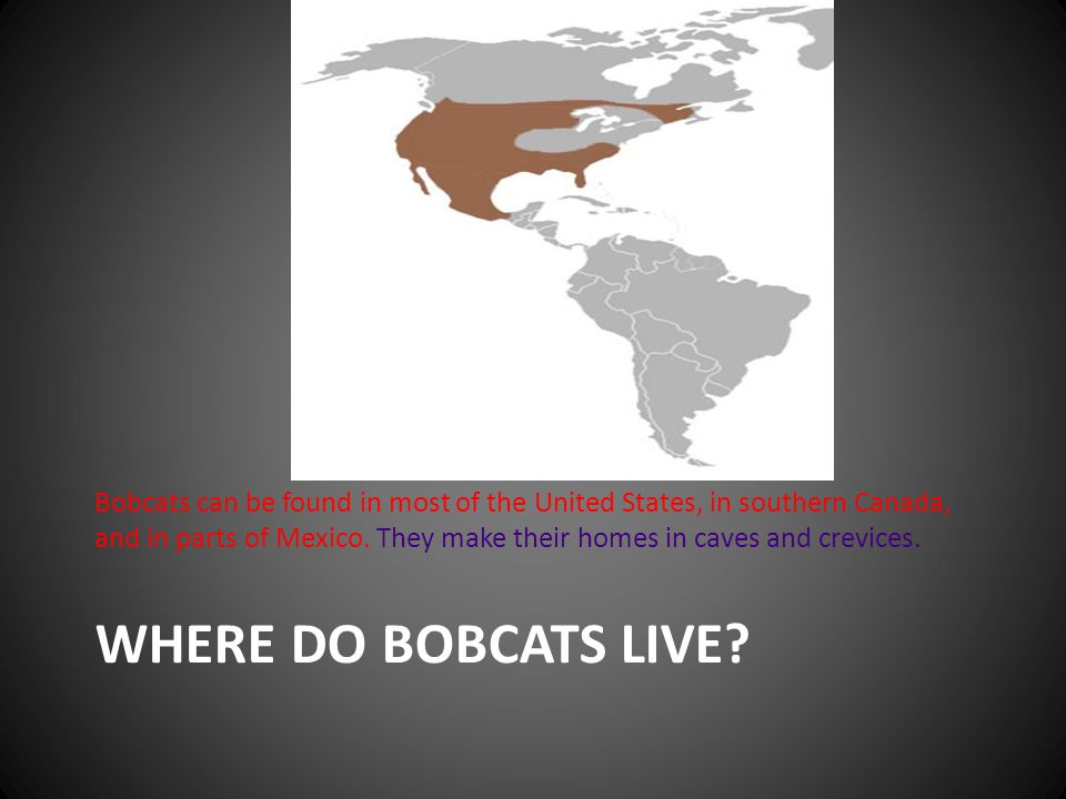 WHERE DO BOBCATS LIVE? Bobcats can be found in most of the United States, in southern Canada, and in parts of Mexico. They make their homes in caves a
