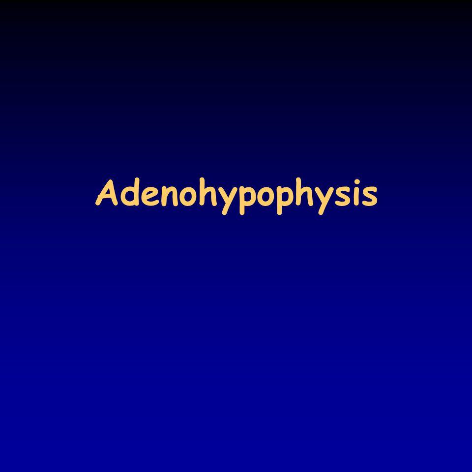 Portal circulation of hypophysis Eckert: Animal Physiology, W.H.Freeman and Co., N.Y.,2000, Fig.