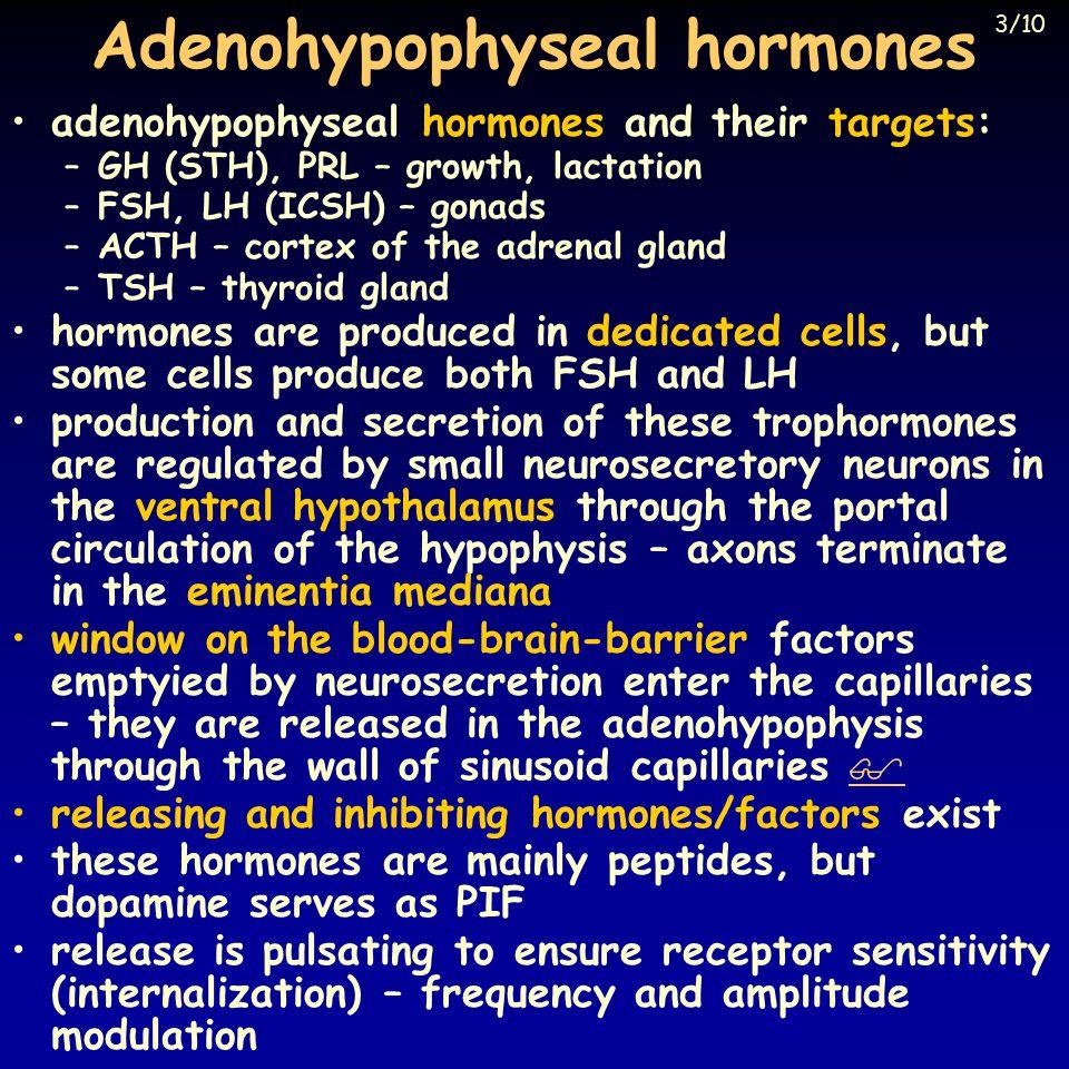 Descending effects PRL ACTH hGH TSH FSH+LH hypophyseotrop cells PIF TRH CRH GnRH SRIF GHRH light SCN limbic system sensory systems pain feeding psychic factors 4/10