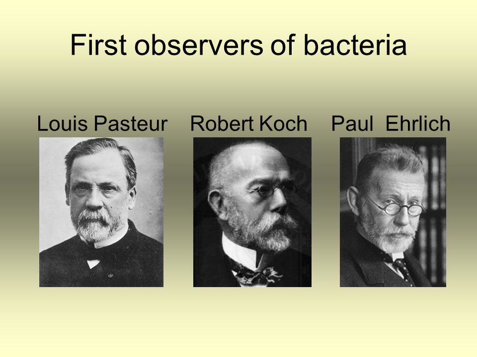 First observers of bacteria Louis Pasteur Robert Koch Paul Ehrlich