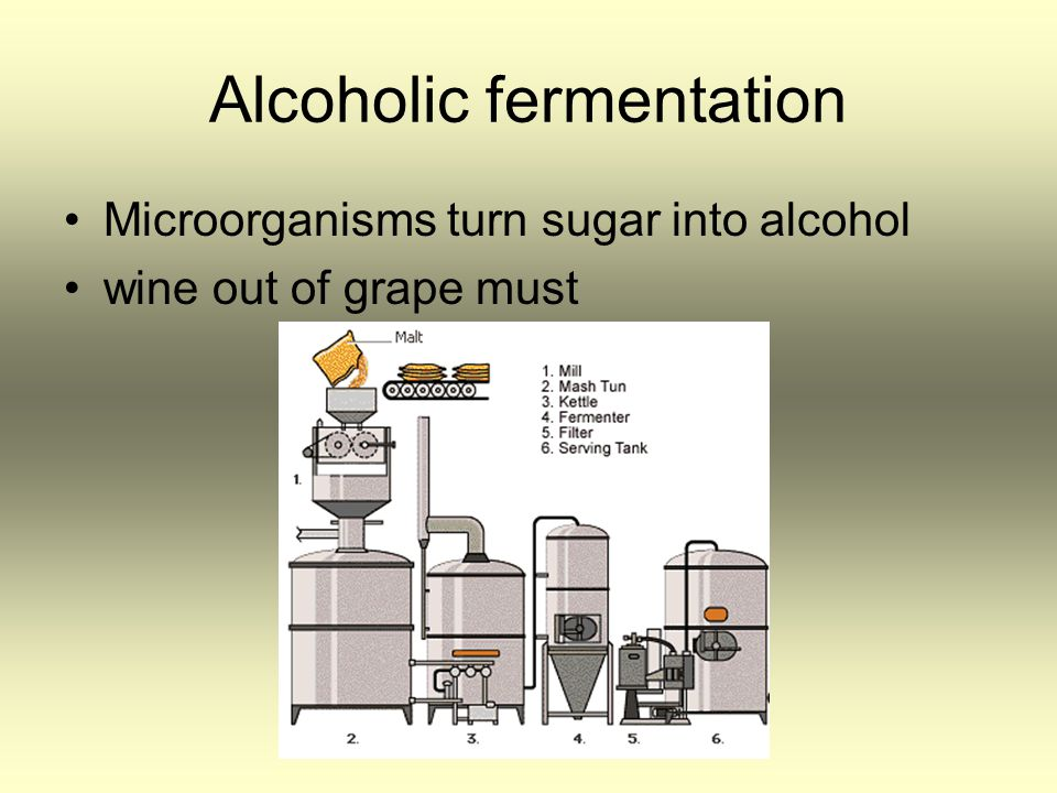 Alcoholic fermentation Microorganisms turn sugar into alcohol wine out of grape must