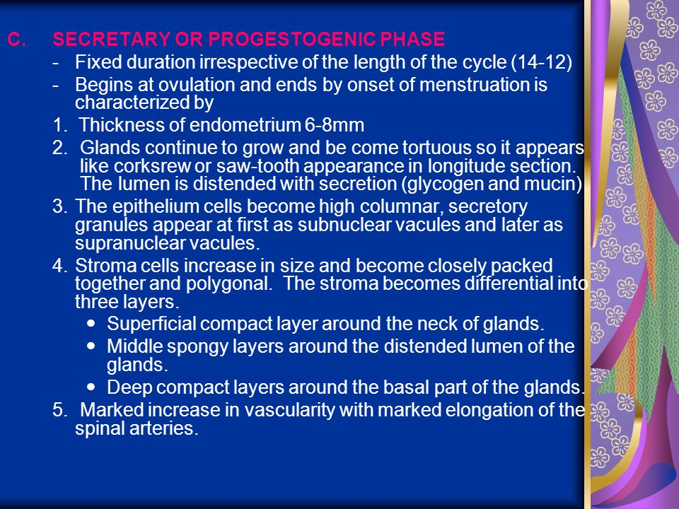 C.SECRETARY OR PROGESTOGENIC PHASE -Fixed duration irrespective of the length of the cycle (14-12) -Begins at ovulation and ends by onset of menstruat