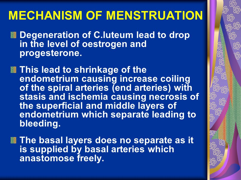 MECHANISM OF MENSTRUATION Degeneration of C.luteum lead to drop in the level of oestrogen and progesterone. This lead to shrinkage of the endometrium