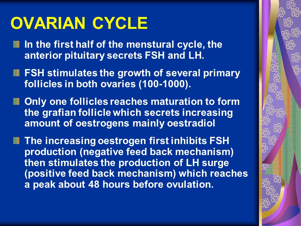 OVARIAN CYCLE (con't.) LH surge lead to ovulation and formation of corpus luteum LH maintain the growth of corpus luteum and stimulates it to secret oestrogen and progesterone.