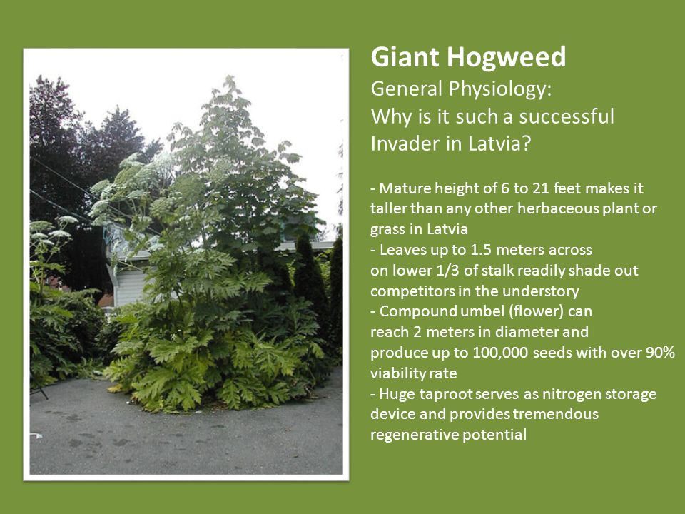 Combine cluster For each cluster find range of variable values where the majority of Giant Hogweed pixels fall map shows all pixels whose environmental variables resemble any of the four clusters, and are therefore likely candidates for future Giant Hogweed colonization.