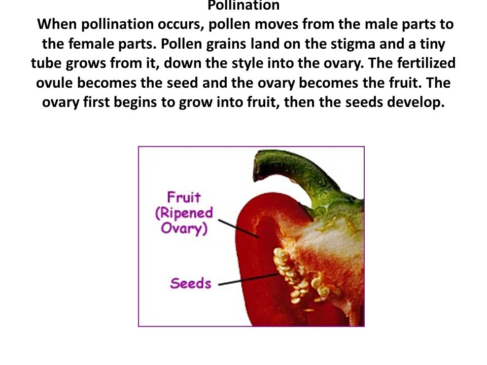 Part 6 is the part of the flower that holds the pollen.