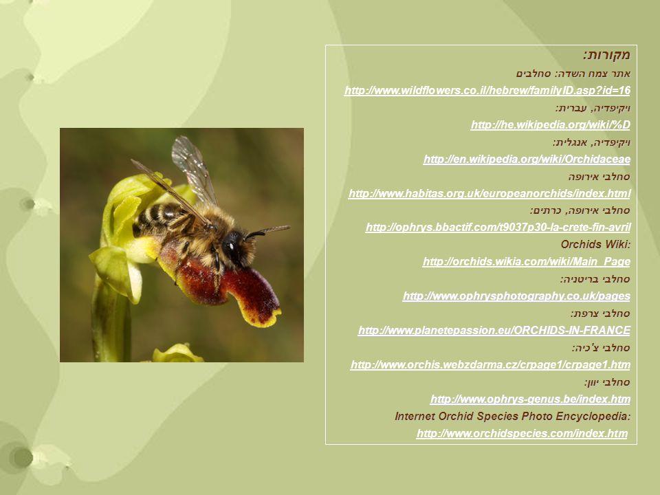 מקורות: אתר צמח השדה: סחלבים http://www.wildflowers.co.il/hebrew/familyID.asp?id=16 ויקיפדיה, עברית: http://he.wikipedia.org/wiki/%D ויקיפדיה, אנגלית: http://en.wikipedia.org/wiki/Orchidaceae סחלבי אירופה http://www.habitas.org.uk/europeanorchids/index.html סחלבי אירופה, כרתים: http://ophrys.bbactif.com/t9037p30-la-crete-fin-avril Orchids Wiki: http://orchids.wikia.com/wiki/Main_Page סחלבי בריטניה: http://www.ophrysphotography.co.uk/pages סחלבי צרפת: http://www.planetepassion.eu/ORCHIDS-IN-FRANCE סחלבי צ כיה: http://www.orchis.webzdarma.cz/crpage1/crpage1.htm סחלבי יוון: http://www.ophrys-genus.be/index.htm Internet Orchid Species Photo Encyclopedia: http://www.orchidspecies.com/index.htm