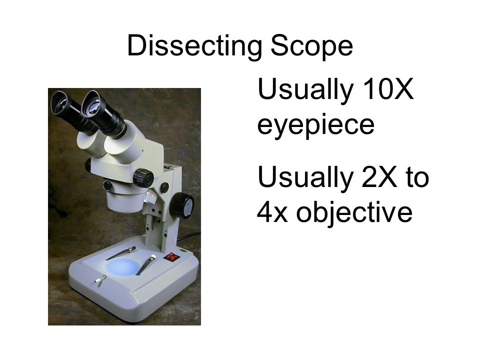 Dissecting Scope Usually 10X eyepiece Usually 2X to 4x objective