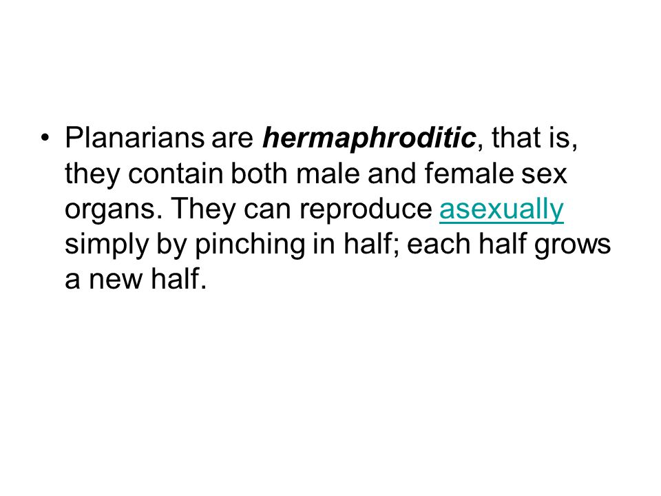 Planarians are hermaphroditic, that is, they contain both male and female sex organs. They can reproduce asexually simply by pinching in half; each ha