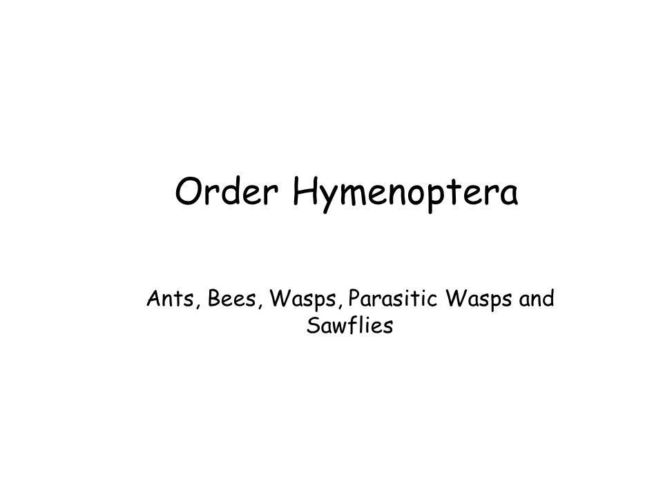 Order Hymenoptera Ants, Bees, Wasps, Parasitic Wasps and Sawflies