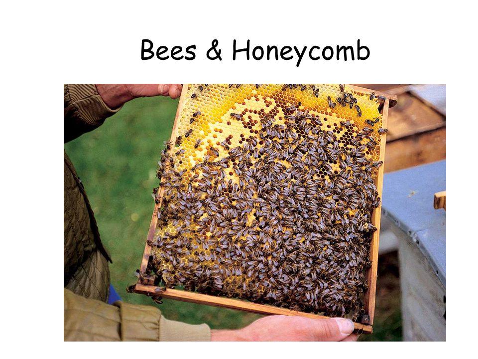 Bees & Honeycomb