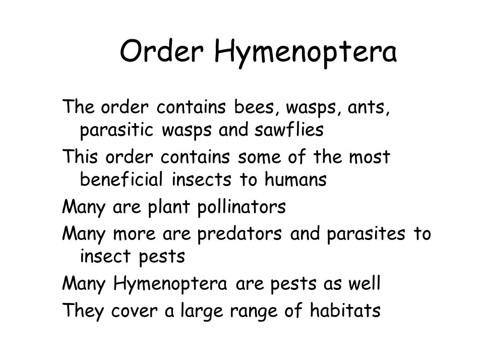 Order Hymenoptera The order contains bees, wasps, ants, parasitic wasps and sawflies This order contains some of the most beneficial insects to humans