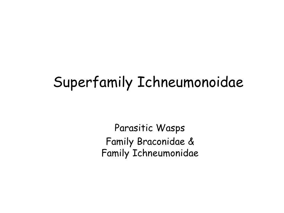 Superfamily Ichneumonoidae Parasitic Wasps Family Braconidae & Family Ichneumonidae