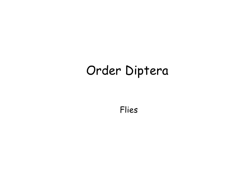 Order Diptera Flies