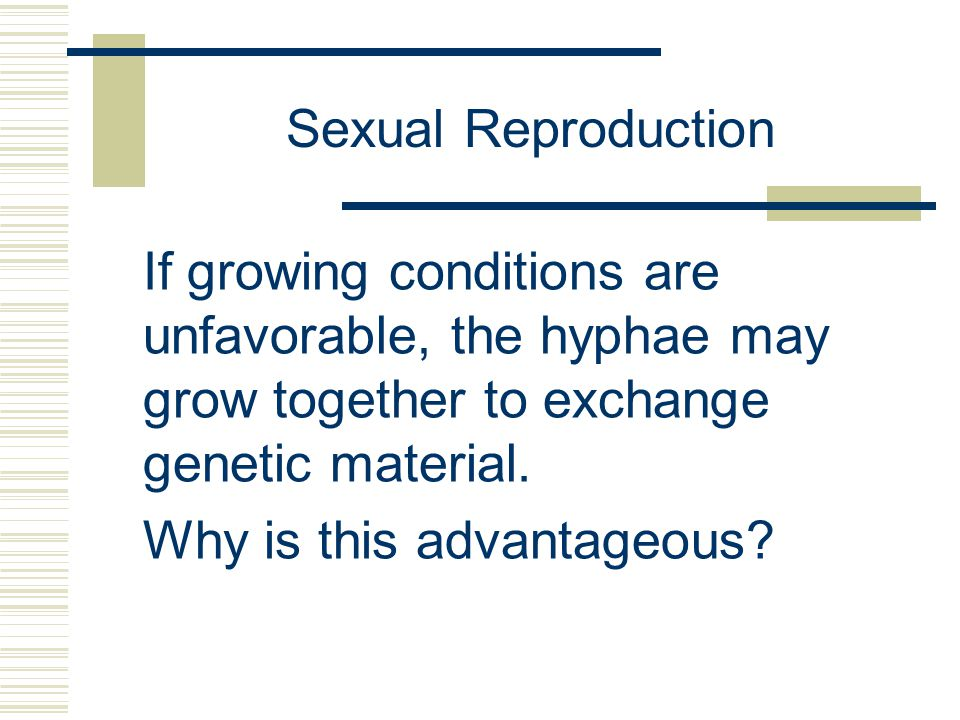 Sexual Reproduction If growing conditions are unfavorable, the hyphae may grow together to exchange genetic material. Why is this advantageous?