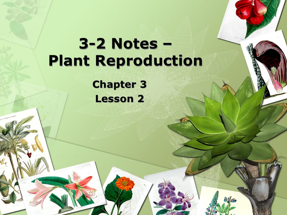 3-2 Notes – Plant Reproduction Chapter 3 Lesson 2 Chapter 3 Lesson 2