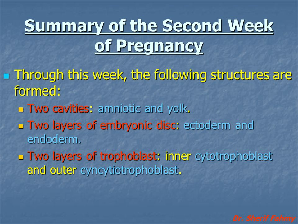 Summary of the Second Week of Pregnancy Through this week, the following structures are formed: Through this week, the following structures are formed
