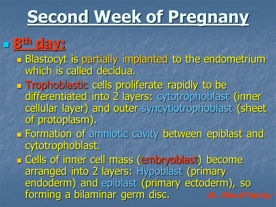 Second Week of Pregnany 8 th day: 8 th day: Blastocyt is partially implanted to the endometrium which is called decidua. Blastocyt is partially implan