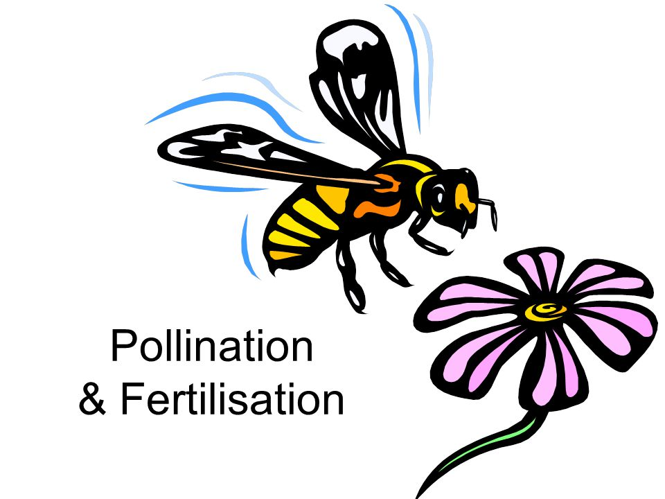 Pollination & Fertilisation