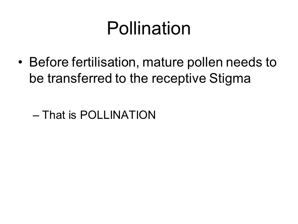 Pollination Before fertilisation, mature pollen needs to be transferred to the receptive Stigma –That is POLLINATION