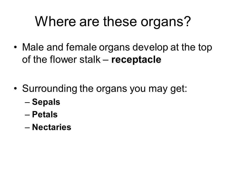 Where are these organs.