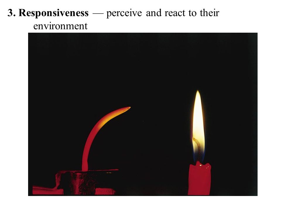 3. Responsiveness — perceive and react to their environment
