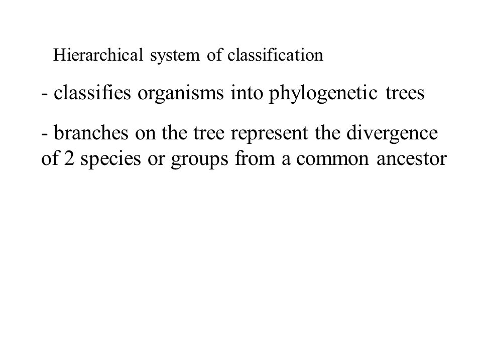 Hierarchical system of classification - classifies organisms into phylogenetic trees - branches on the tree represent the divergence of 2 species or groups from a common ancestor