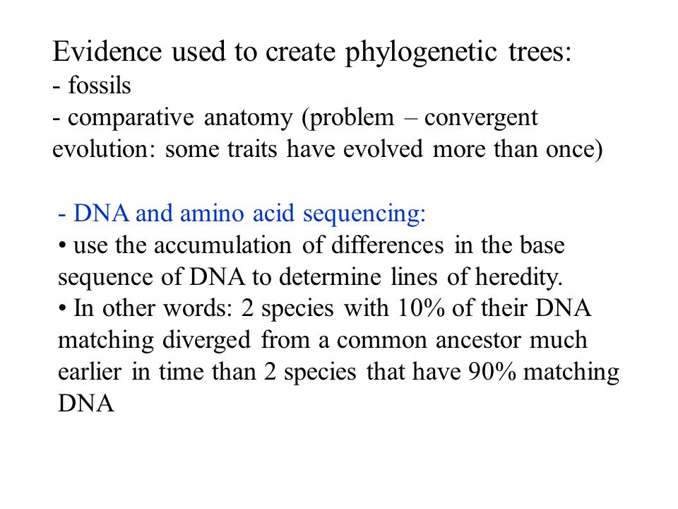 Evidence used to create phylogenetic trees: - fossils - comparative anatomy (problem – convergent evolution: some traits have evolved more than once) - DNA and amino acid sequencing: use the accumulation of differences in the base sequence of DNA to determine lines of heredity.