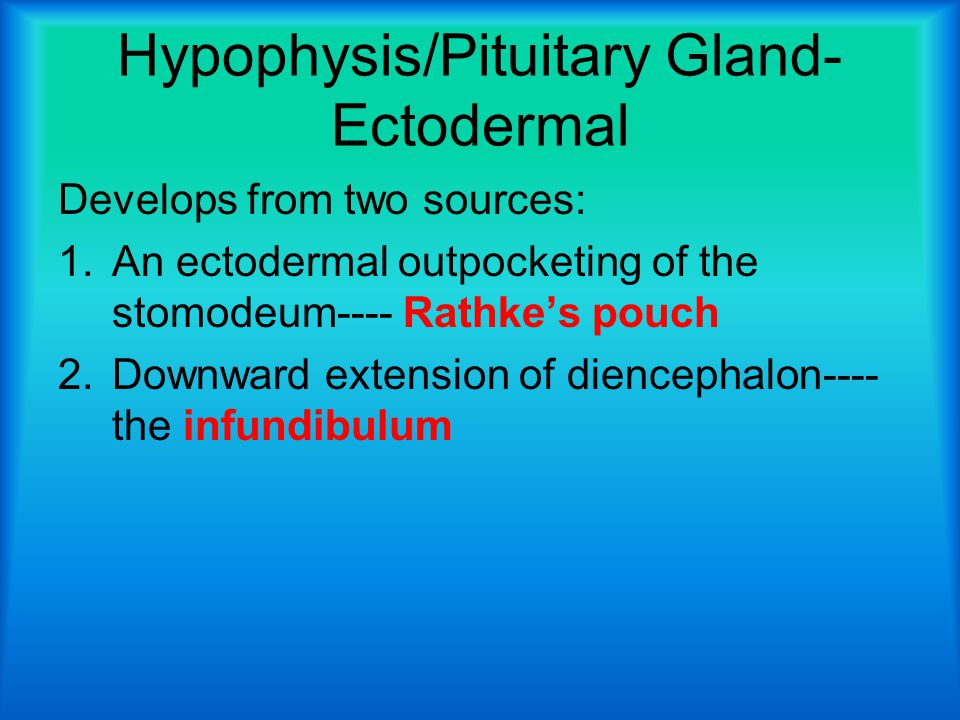 Hypophysis/Pituitary Gland- Ectodermal Develops from two sources: 1.An ectodermal outpocketing of the stomodeum---- Rathke's pouch 2.Downward extension of diencephalon---- the infundibulum