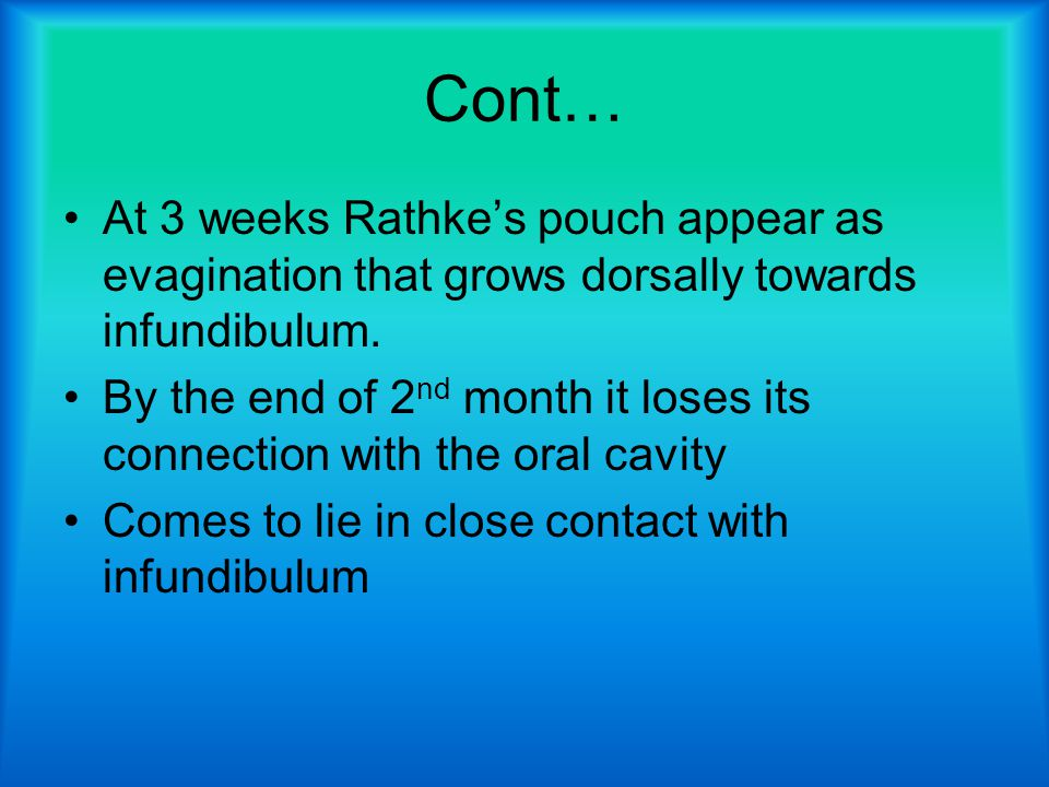 Cont… At 3 weeks Rathke's pouch appear as evagination that grows dorsally towards infundibulum.