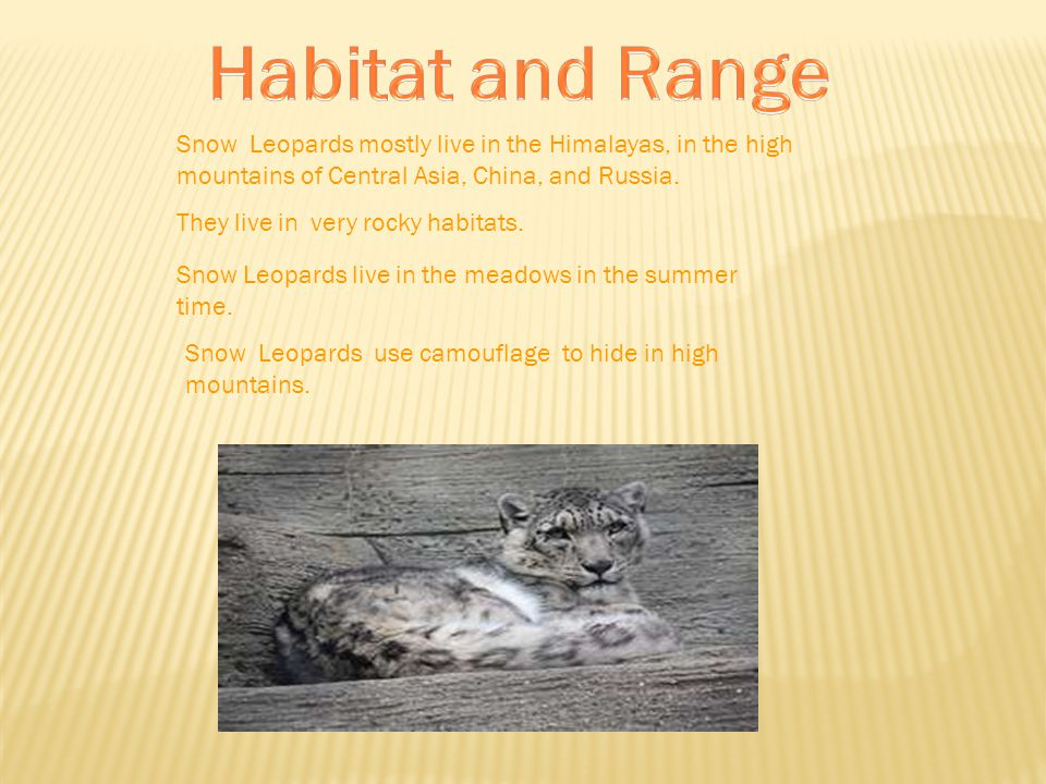 Snow Leopards mostly live in the Himalayas, in the high mountains of Central Asia, China, and Russia.