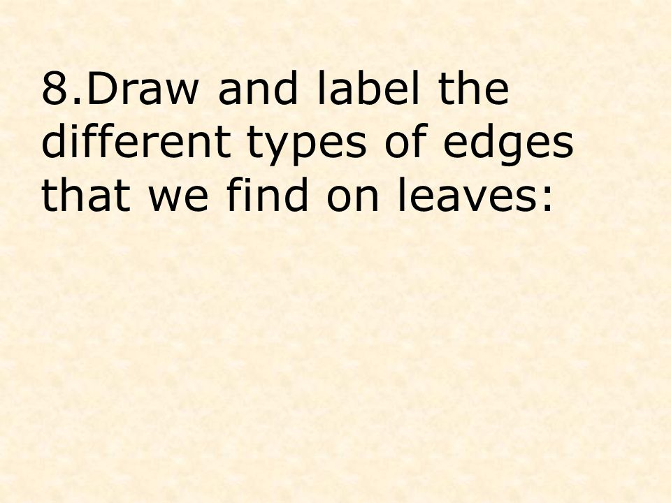 8.Draw and label the different types of edges that we find on leaves: