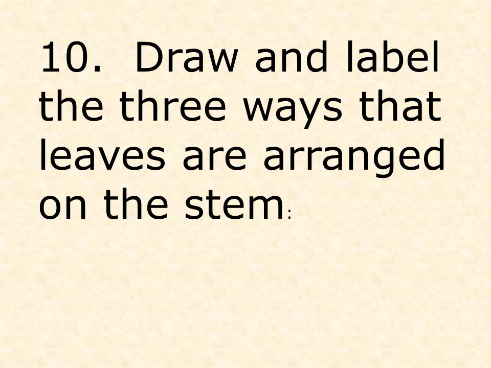 10. Draw and label the three ways that leaves are arranged on the stem :