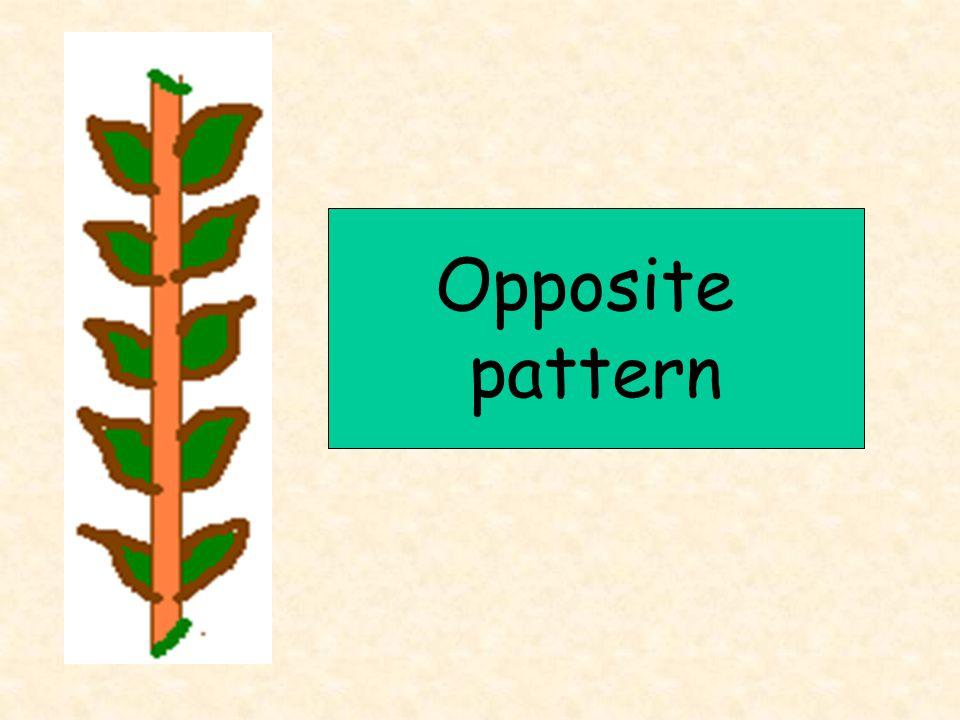 Opposite pattern