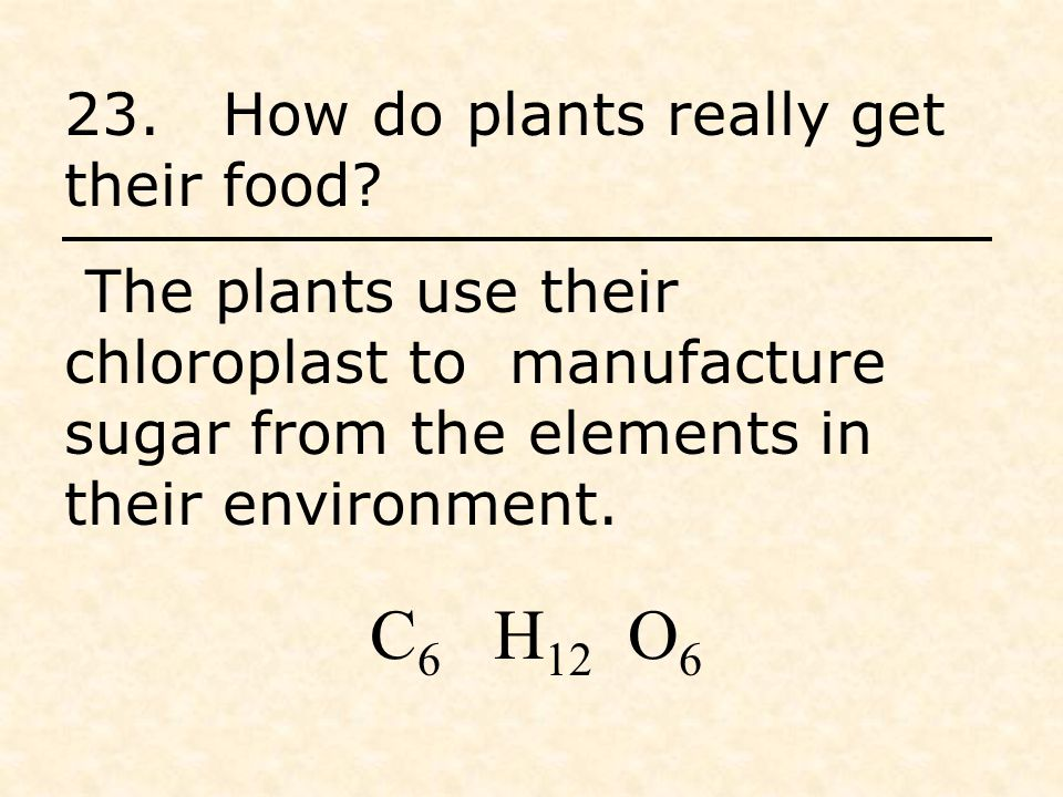 23. How do plants really get their food.