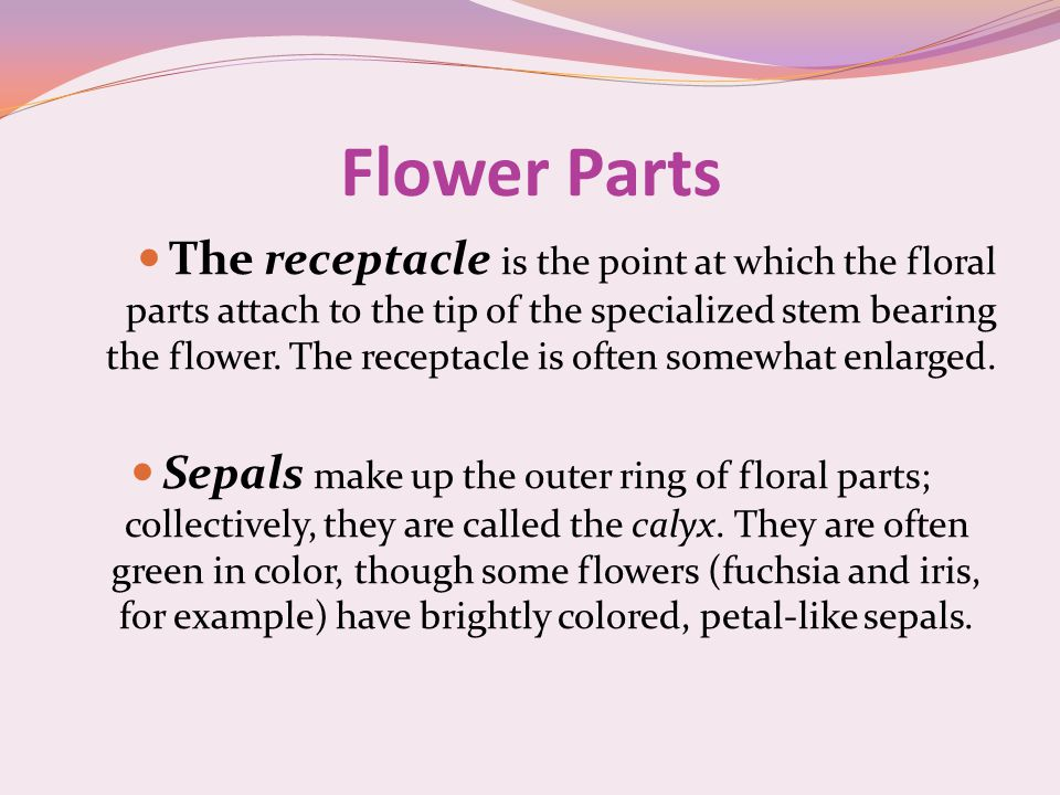 The receptacle is the point at which the floral parts attach to the tip of the specialized stem bearing the flower.